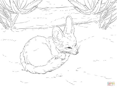 coloring pages fennec fox fox relaxing coloring page fennec fox coloring pages fox