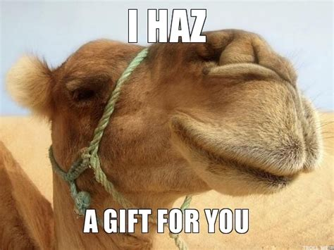 camel meme a gift ideas for camel gifts pinterest
