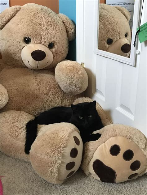 giant teddy bear bed 25 best ideas about giant teddy bear on pinterest big
