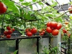 New Pot Hidroponik Wick System Mei hidropon 237 a in cultivos hidrop 243 nicos page 5 scoop it