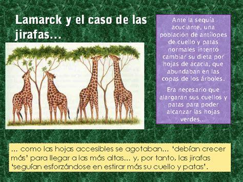 imagenes de las jirafas de lamarck evoluci 243 n de la vida existencial monografias com