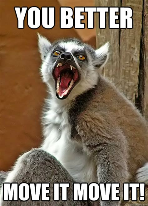 Lemur Meme - you better move it move it angry lemur quickmeme