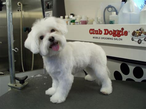puppy haircut club doggie mobile grooming salon home