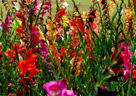 herbstblumen garten 187 herbstblumen f 220 r balkon und garten farmer