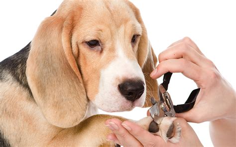 nail trimming expert nail trimming tips a stress free pedicure for you and your pup
