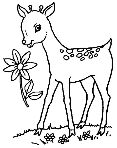 Fawns Coloring Pages Fawn Coloring Pages