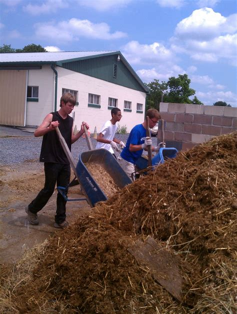 mucking stalls mucking out your s stall