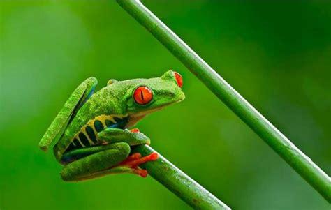 99 Fakta Unik Tentang Tumbuhan belajar kehidupan dari katak bernas id