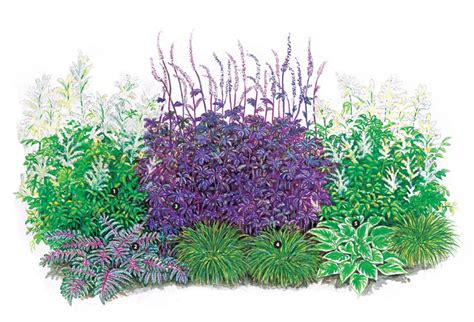 Blumen Stauden Halbschatten by Pflanzenpaket Szenenwechsel Im Halbschatten Stauden