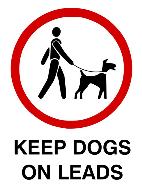 how to your on a lead madness unleashed why leash laws are important