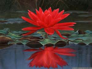 Crimson Lotus Flower Vastu Solutions