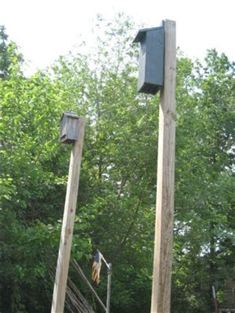 where to put a bat house in your yard where to put a bat house in your yard 28 images guide