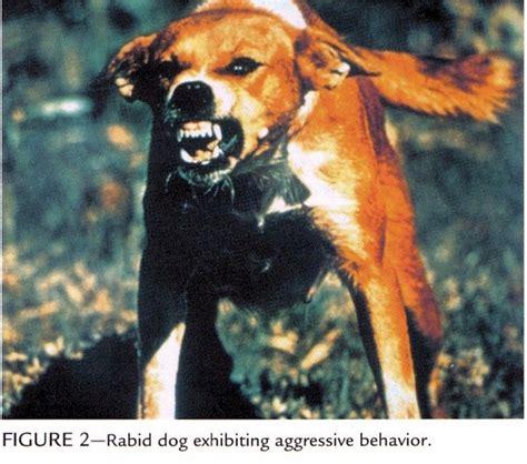 rabid puppies index of vim458 virology studpages2010 rabies