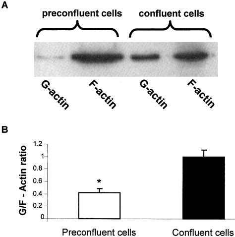 protein f aktin actin cytoskeleton organization and posttranscriptional