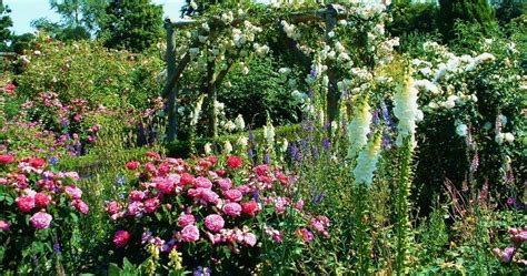 Garden Of Uk Roses And Gardens And Where To See The Best Great