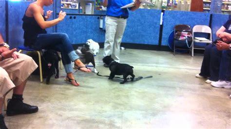 petsmart classes puppy class at petsmart level 1 doovi