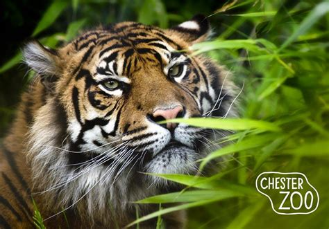 chester zoo images reverse search