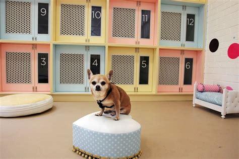 layout de hotel para cachorro como montar um hotel para cahorros franquia empresa