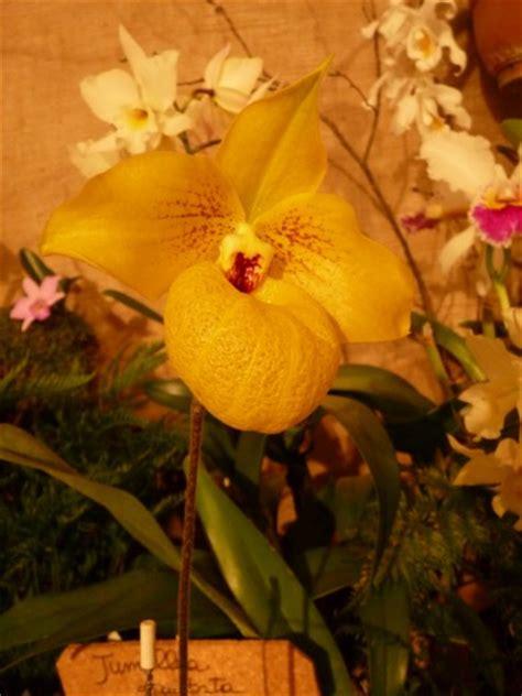 foto fiori piu belli mondo foto orchidee in centro i fiori pi 249 belli mondo 1