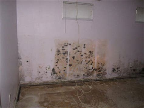 mold removal home image search results