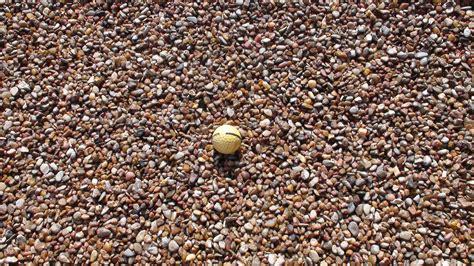 backyard gravel rock rock n dirt yard