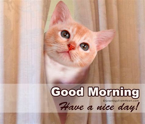 good morning images  cute cats