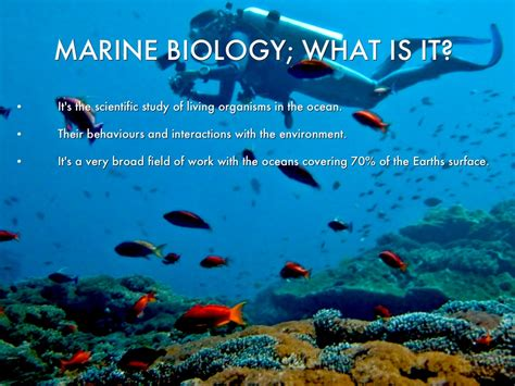 Description For A Marine Biologist by Marine Biology By Armstrong