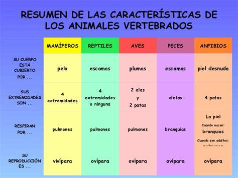 animales vertebrados mamiferos caracteristicas portal los animales vertebrados ud5