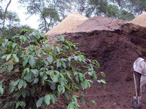 Pupuk Paket Tanaman Kopi hebat pupuk tanaman kopi dari limbah cangkangnya oleh syukri muhammad syukri kompasiana