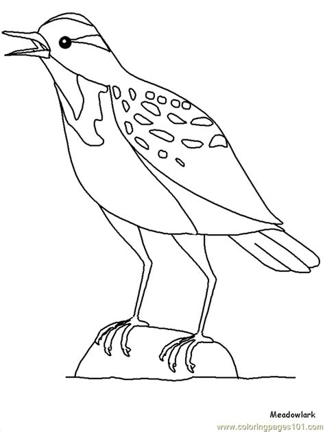 western meadowlark coloring page coloring home