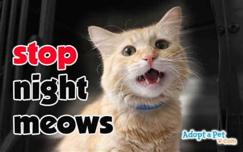 how to stop a cat from on the rug how to stop a cat from meowing cats kittens
