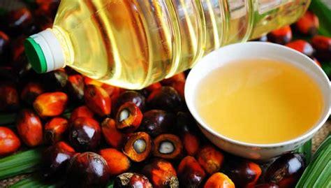 Minyak Zaitun Paling Kecil kelapa sawit minyak sayuran paling kontroversi di dunia free malaysia today