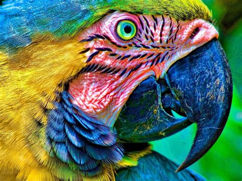 colorful animals colorful feathers frightened animals photo 1024x768