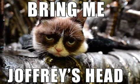 funny cat pictures game  throne cat memes