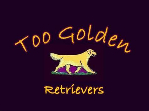 golden retriever rescue anchorage aim hi golden retrievers kasilof alaska usa