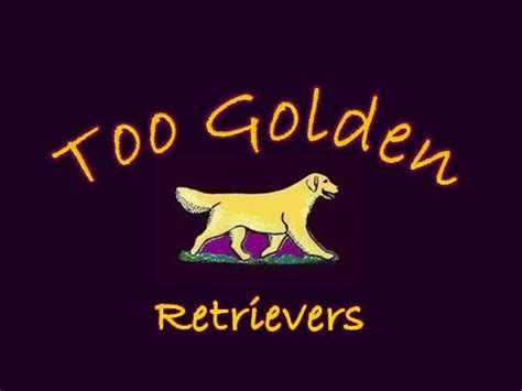 golden retriever rescue fairbanks aim hi golden retrievers kasilof alaska usa