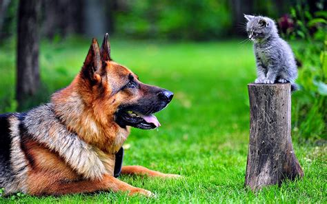 wallpaper cat and dog hd dog and cat wallpapers hd wallpapers high quality