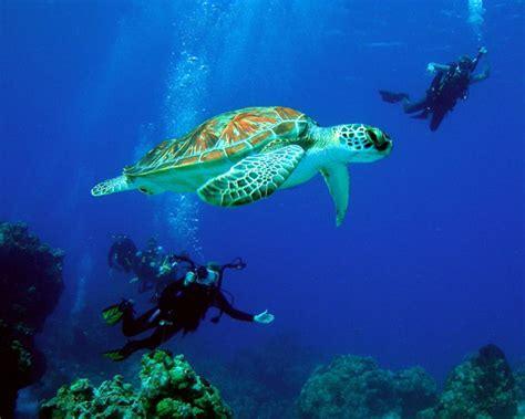 dive cozumel cozumel scuba diving cozumel snorkeling in