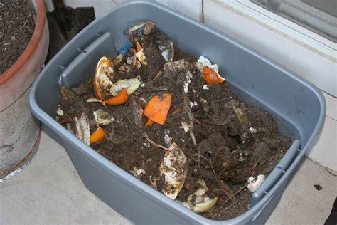 Maggots On Patio Compost Tea Le Village