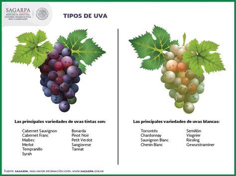 diferencias entre uva verde y morada cocinadelirante 192 best images about sagarpa on pinterest chihuahuas