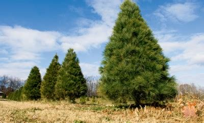 christmas tree farms chattanooga a cing we will go in tennessee s state parks tennessee home and farm