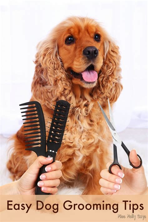 grooming tips easy grooming tips miss molly says
