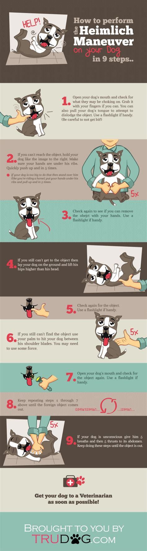 heimlich for dogs how to perform the heimlich maneuver on your in 9 steps