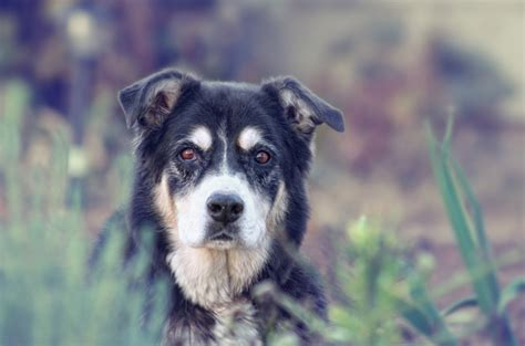 glaucoma in dogs what you need to about glaucoma in dogs