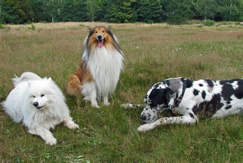 dati nazionale anagrafe canina anacani l anagrafe canina