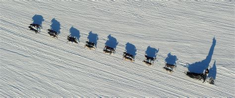 sled race 5 surprising facts about the iditarod sled race