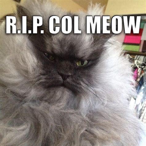 Meow Meme - colonel meow meme memes