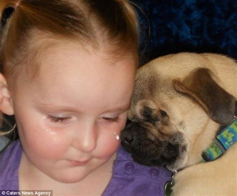 pug wipes blind pug xander given new lease of as a therapy after being put up for