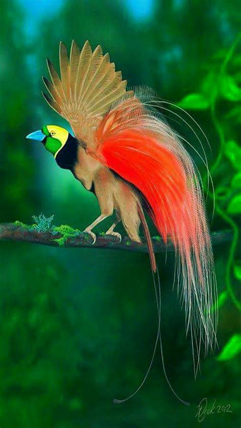 bird with colorful feathers colorful birds raggiania bird of paradise wildlife