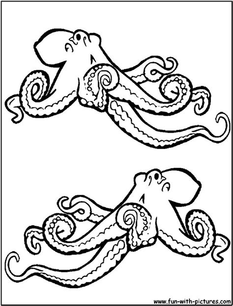 Octopus Coloring Page Cephalopods And Inverts Pinterest Octopus Coloring Page